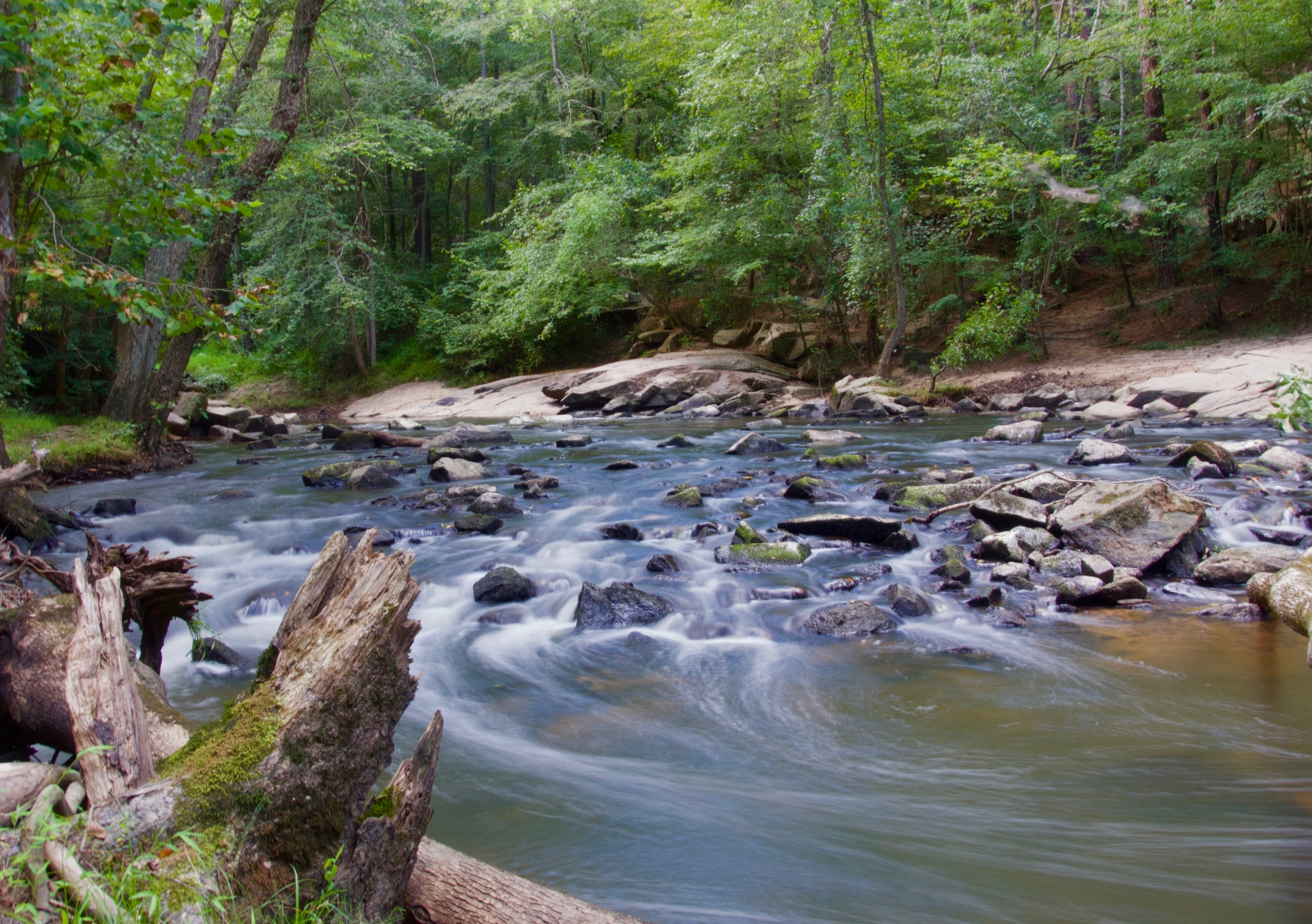 Canva - Stream in a Forest With Grey Rocks